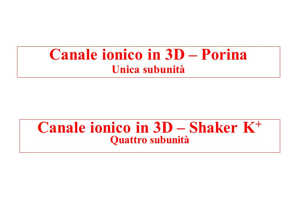 Canale ionico in 3D – Porina Canale ionico in 3D – Shaker K+