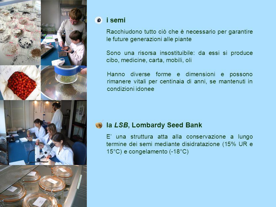 la LSB, Lombardy Seed Bank