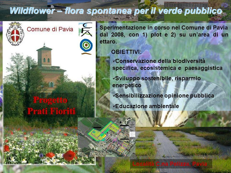 Wildflower – flora spontanea per il verde pubblico
