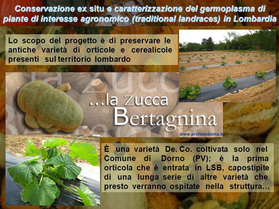 Conservazione ex situ e caratterizzazione del germoplasma di piante di interesse agronomico (traditional landraces) in Lombardia