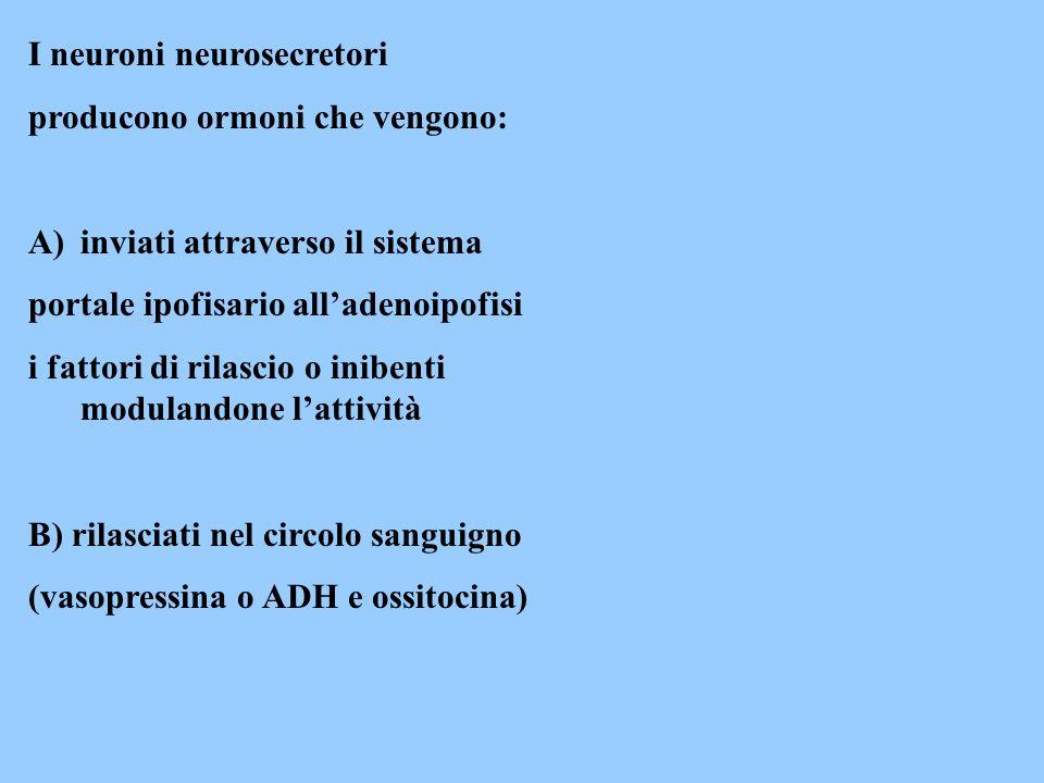 I neuroni neurosecretori