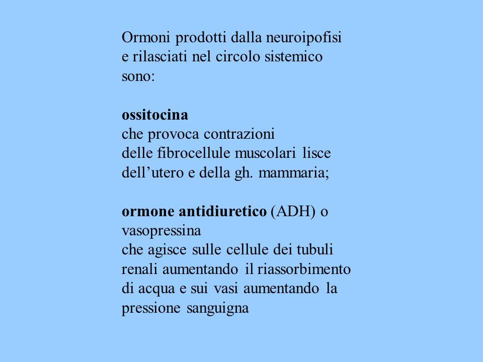 Ormoni prodotti dalla neuroipofisi