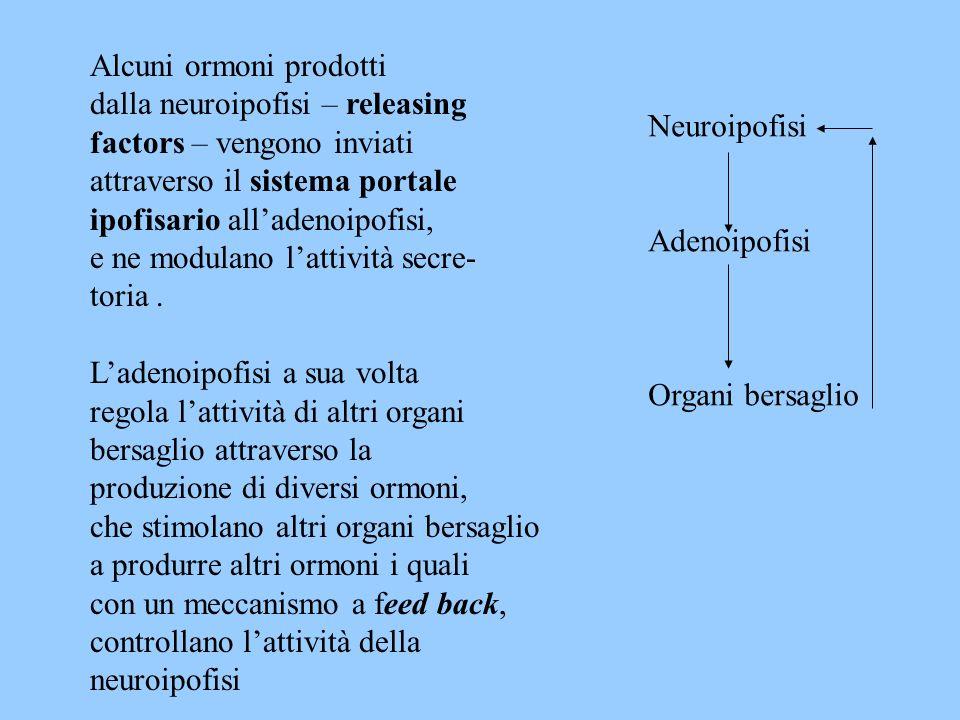 Alcuni ormoni prodotti