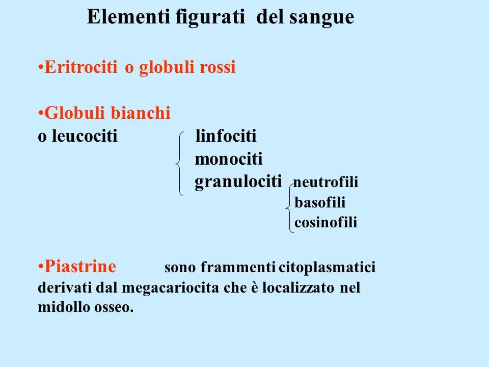 Elementi figurati del sangue