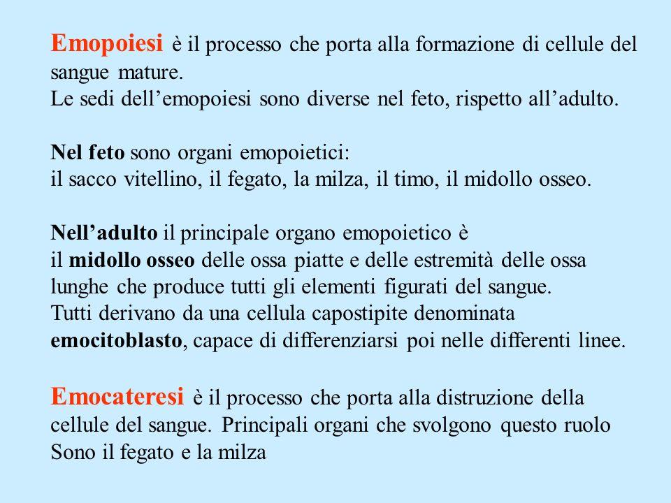 Emopoiesi è il processo che porta alla formazione di cellule del