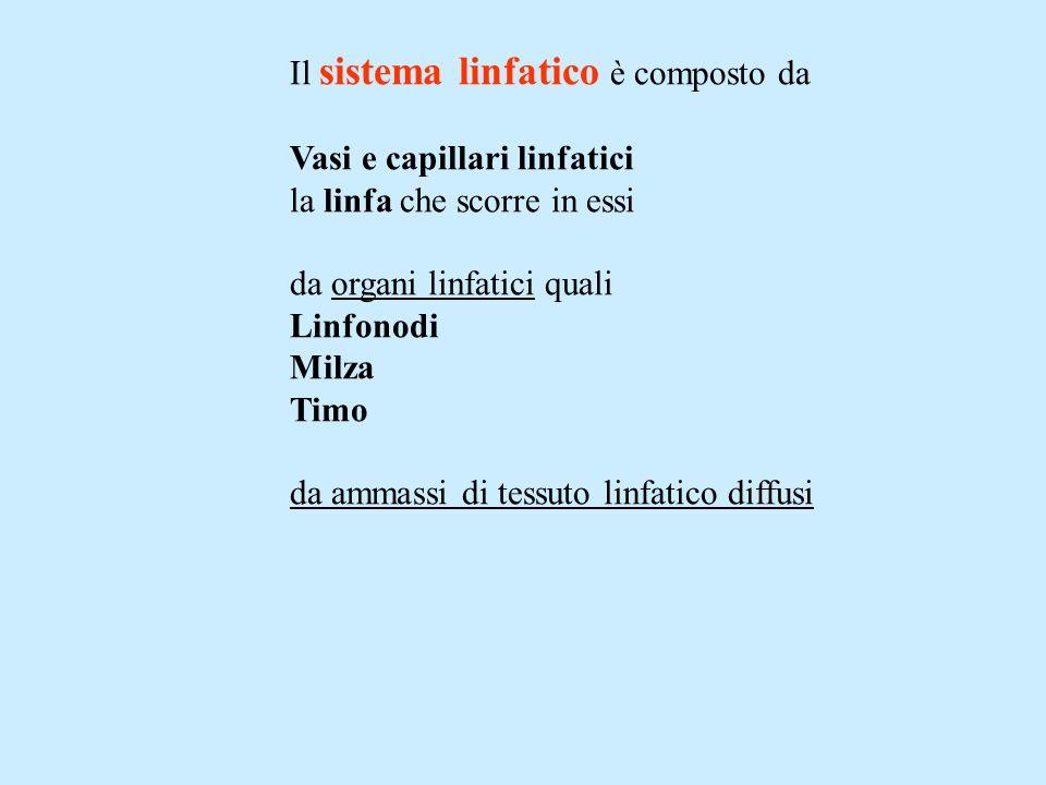 Il sistema linfatico è composto da