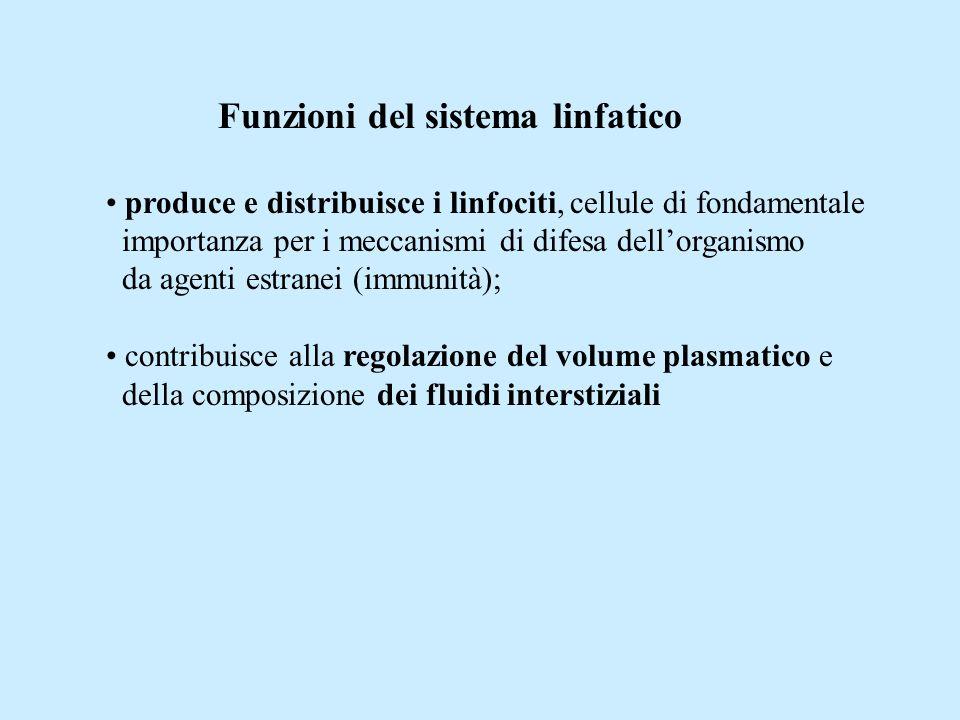 Funzioni del sistema linfatico