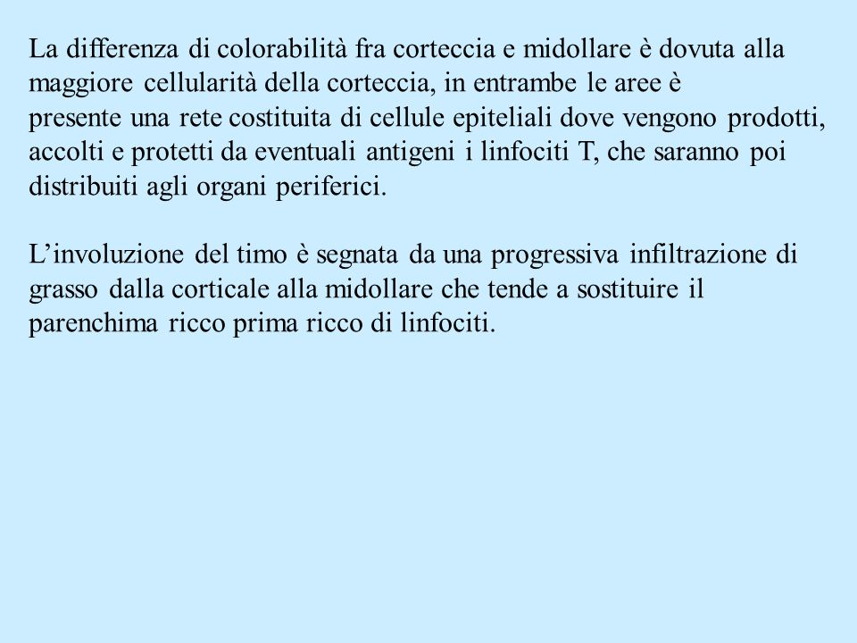 La differenza di colorabilità fra corteccia e midollare è dovuta alla