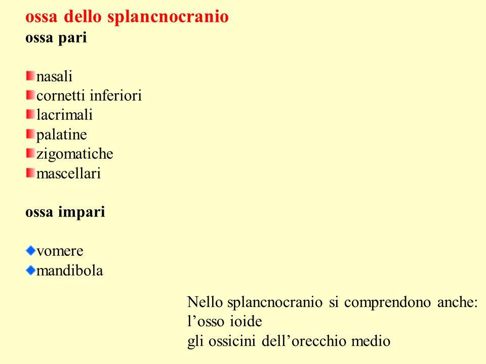 ossa dello splancnocranio