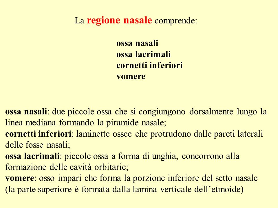 La regione nasale comprende: