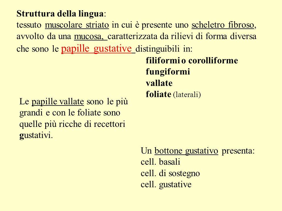 Struttura della lingua: