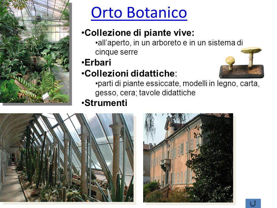 Orto Botanico Collezione di piante vive: Erbari Collezioni didattiche: