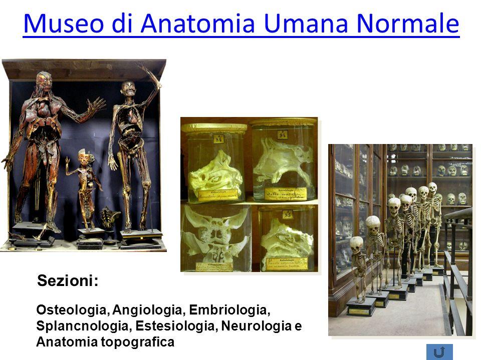 Museo di Anatomia Umana Normale