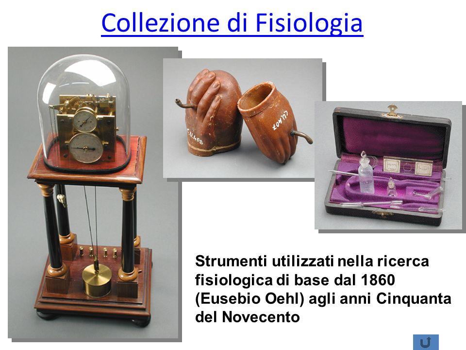 Collezione di Fisiologia