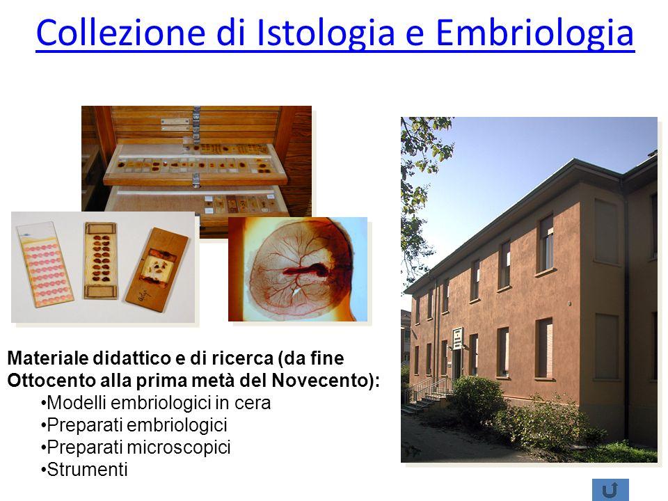 Collezione di Istologia e Embriologia