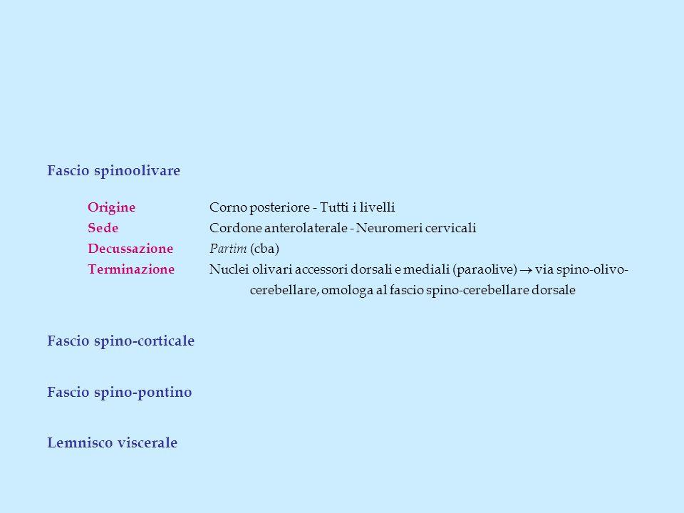 Fascio spino-corticale