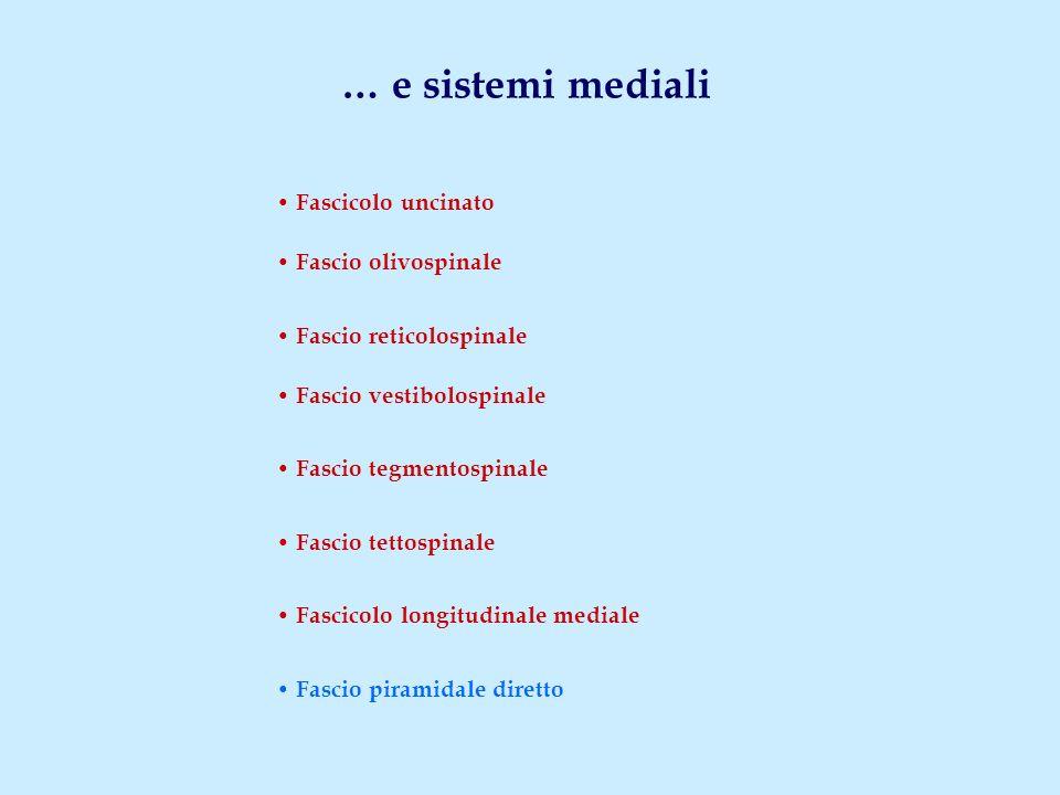 … e sistemi mediali • Fascicolo uncinato • Fascio olivospinale