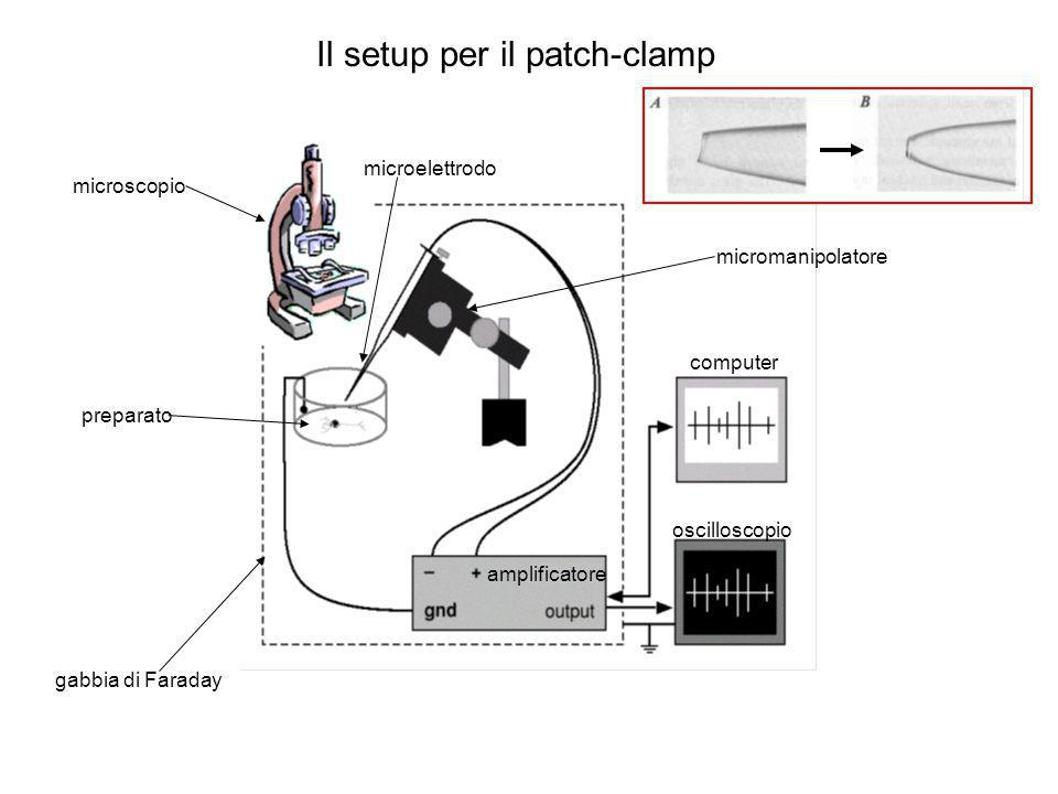 Il setup per il patch-clamp