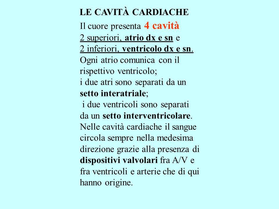 LE CAVITÀ CARDIACHE Il cuore presenta 4 cavità. 2 superiori, atrio dx e sn e. 2 inferiori, ventricolo dx e sn.