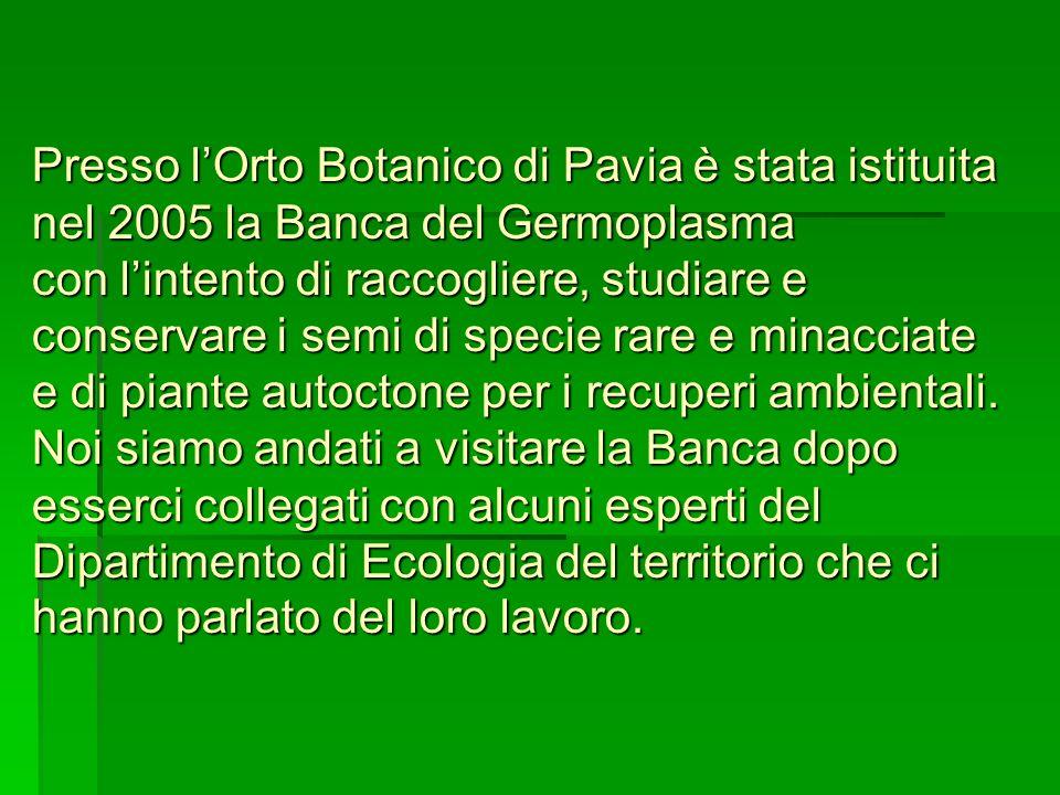 Presso l'Orto Botanico di Pavia è stata istituita nel 2005 la Banca del Germoplasma con l'intento di raccogliere, studiare e conservare i semi di specie rare e minacciate e di piante autoctone per i recuperi ambientali.