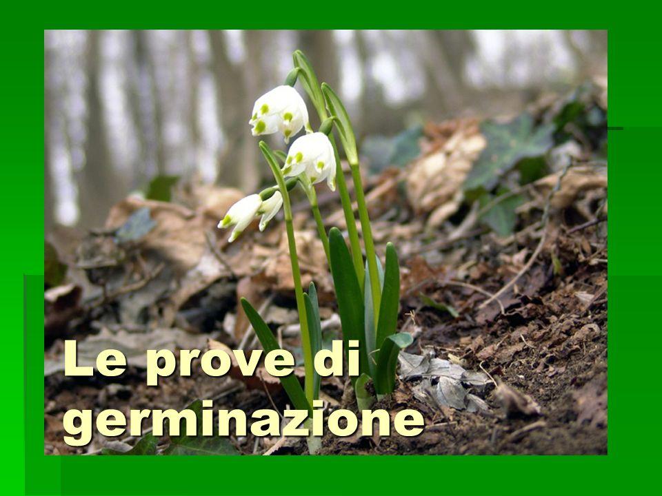 Le prove di germinazione