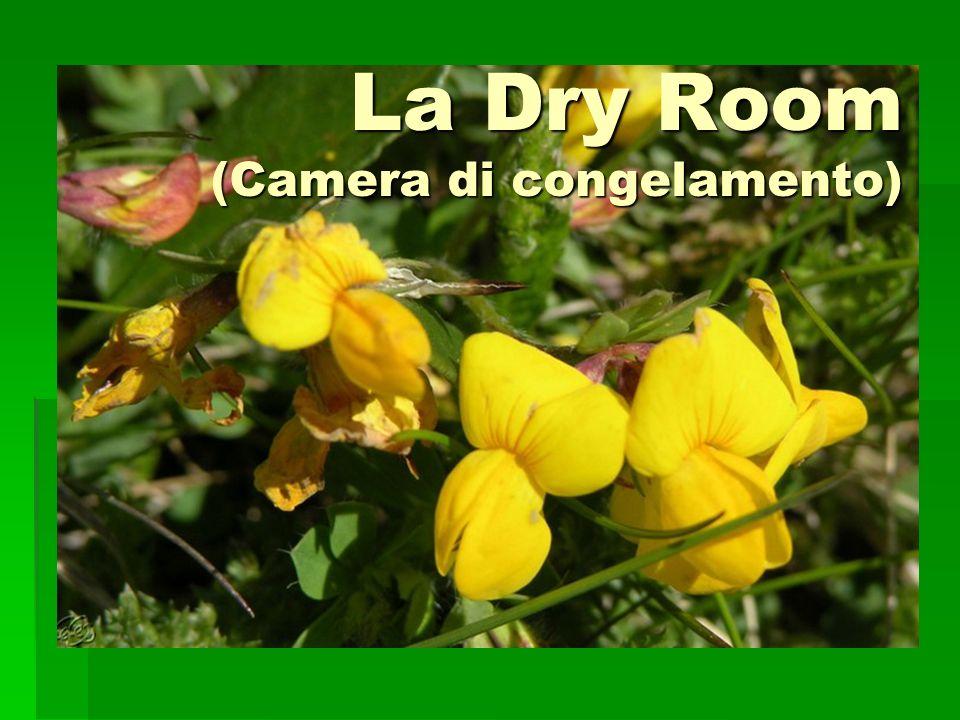 La Dry Room (Camera di congelamento)