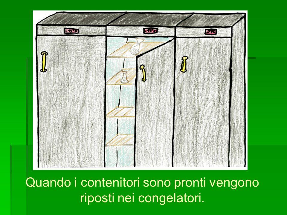 Quando i contenitori sono pronti vengono riposti nei congelatori.