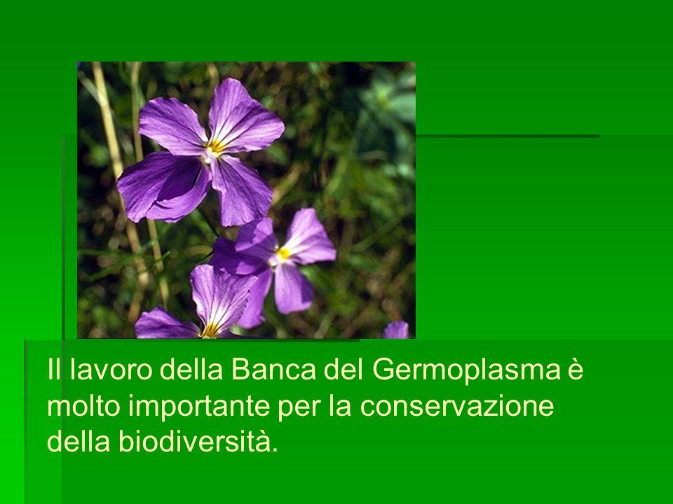 Il lavoro della Banca del Germoplasma è molto importante per la conservazione della biodiversità.