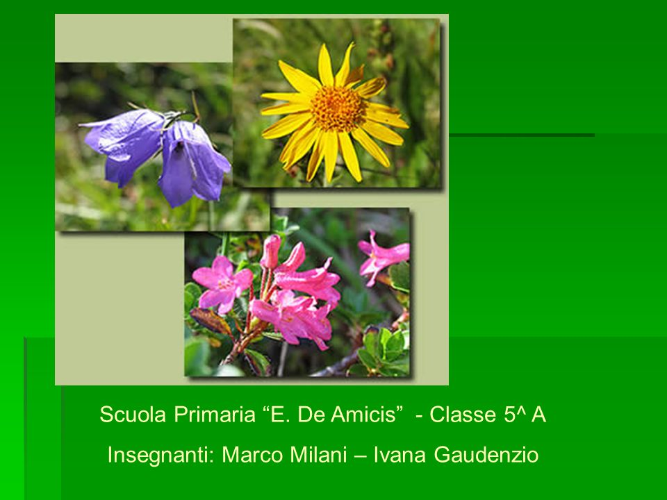 Scuola Primaria E. De Amicis - Classe 5^ A