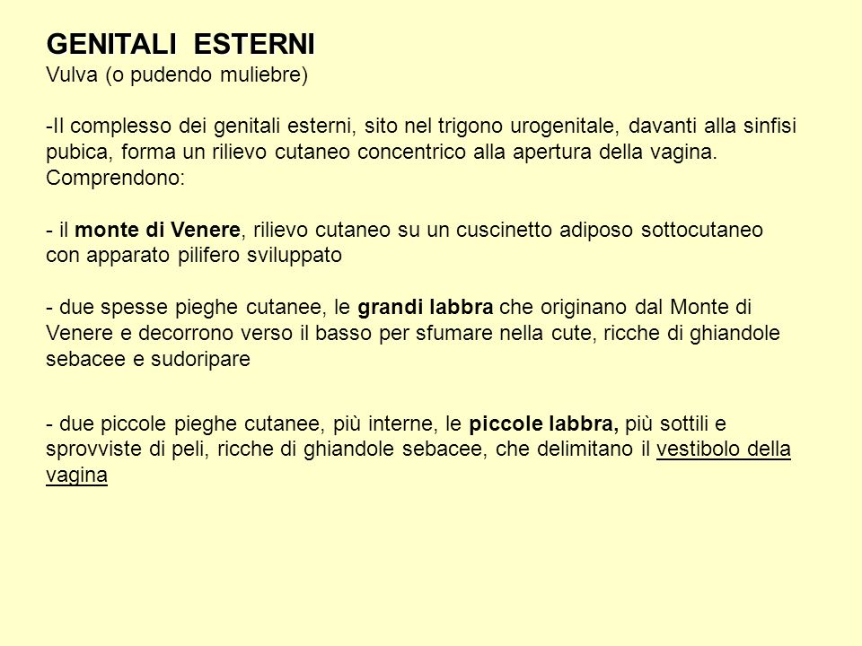 GENITALI ESTERNI Vulva (o pudendo muliebre)