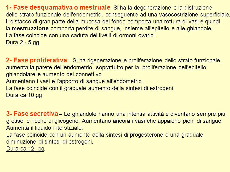 1- Fase desquamativa o mestruale- Si ha la degenerazione e la distruzione