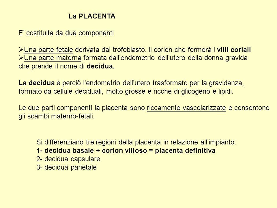La PLACENTA E' costituita da due componenti. Una parte fetale derivata dal trofoblasto, il corion che formerà i villi coriali.