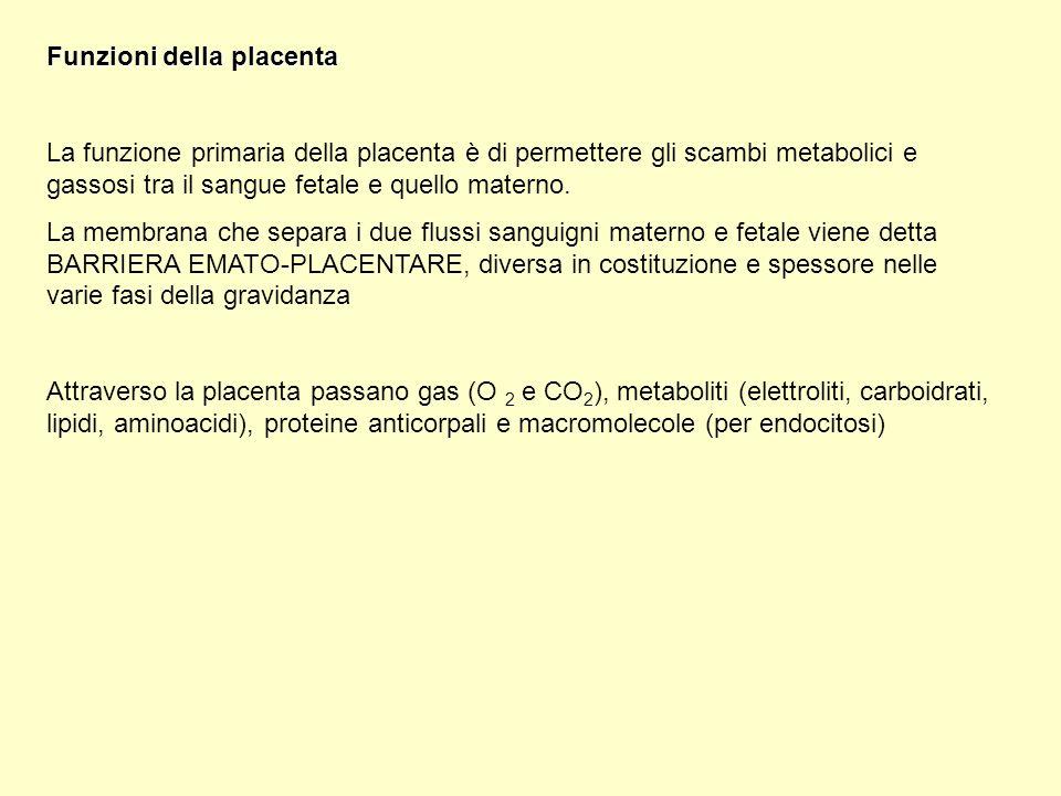 Funzioni della placenta
