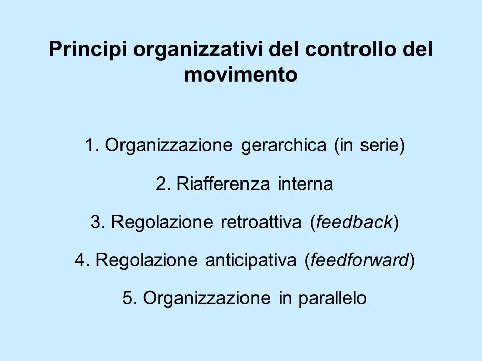 Principi organizzativi del controllo del movimento
