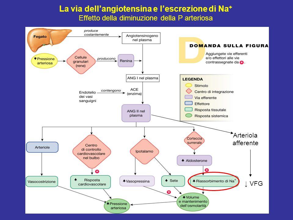 La via dell'angiotensina e l'escrezione di Na+