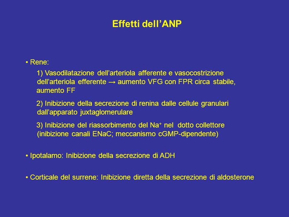Effetti dell'ANP • Rene: