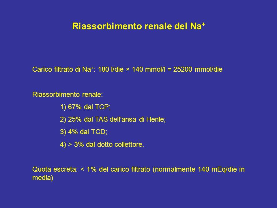 Riassorbimento renale del Na+