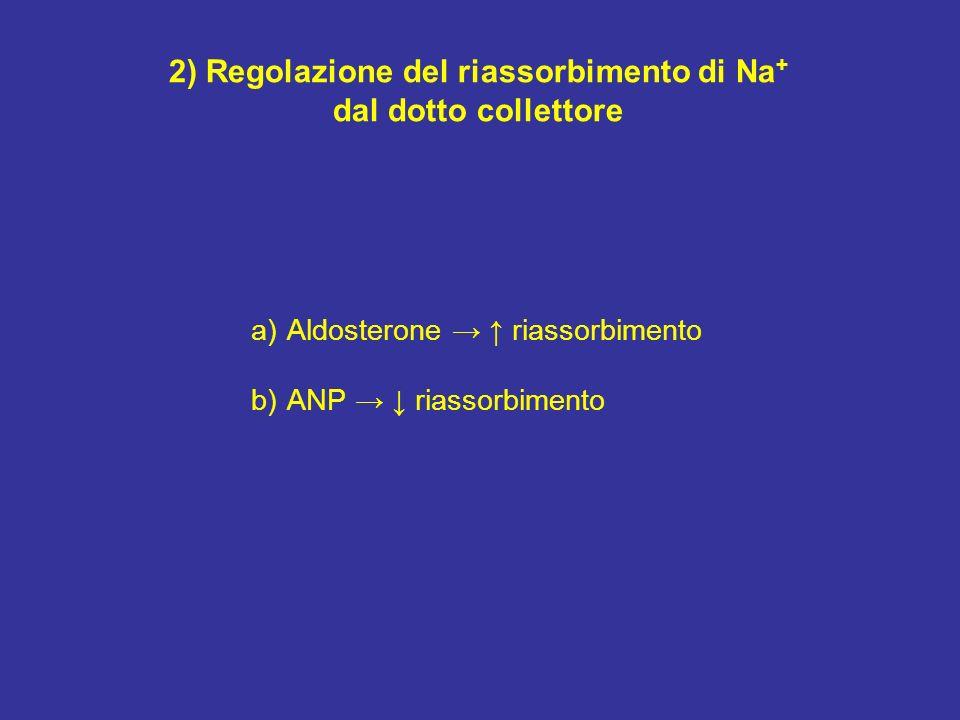 2) Regolazione del riassorbimento di Na+