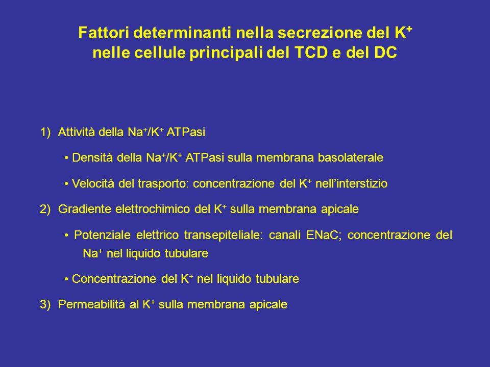 Fattori determinanti nella secrezione del K+
