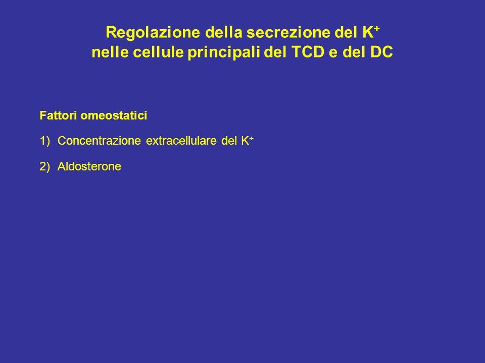 Regolazione della secrezione del K+