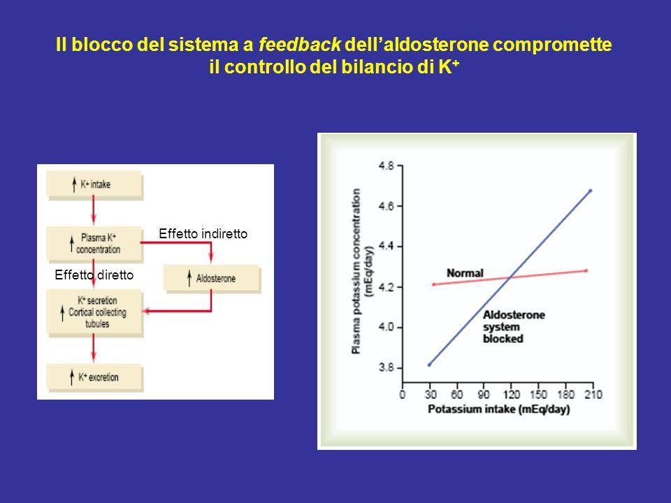 Il blocco del sistema a feedback dell'aldosterone compromette il controllo del bilancio di K+