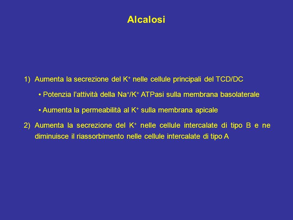 Alcalosi Aumenta la secrezione del K+ nelle cellule principali del TCD/DC. • Potenzia l'attività della Na+/K+ ATPasi sulla membrana basolaterale.