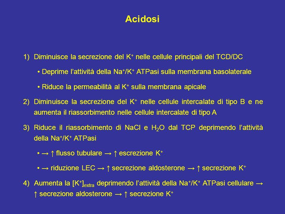 AcidosiDiminuisce la secrezione del K+ nelle cellule principali del TCD/DC. • Deprime l'attività della Na+/K+ ATPasi sulla membrana basolaterale.