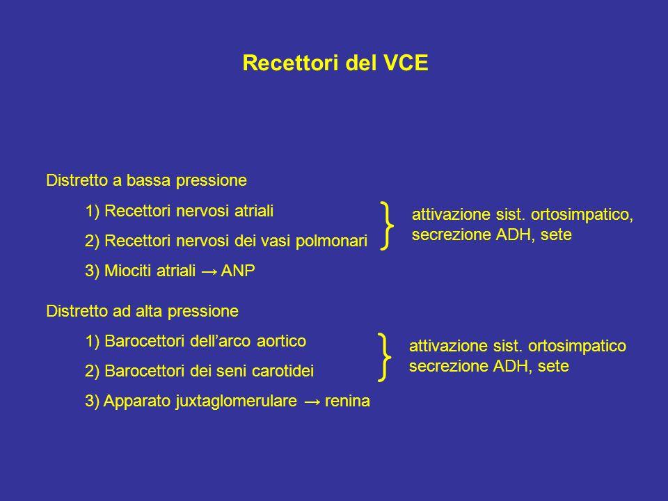} } Recettori del VCE Distretto a bassa pressione