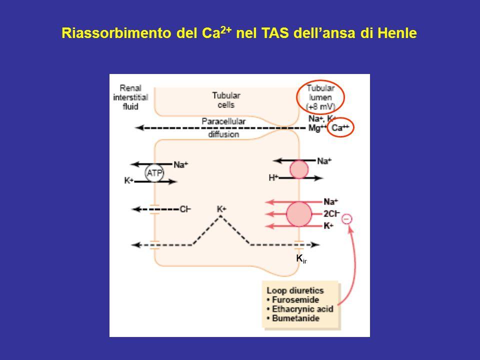 Riassorbimento del Ca2+ nel TAS dell'ansa di Henle