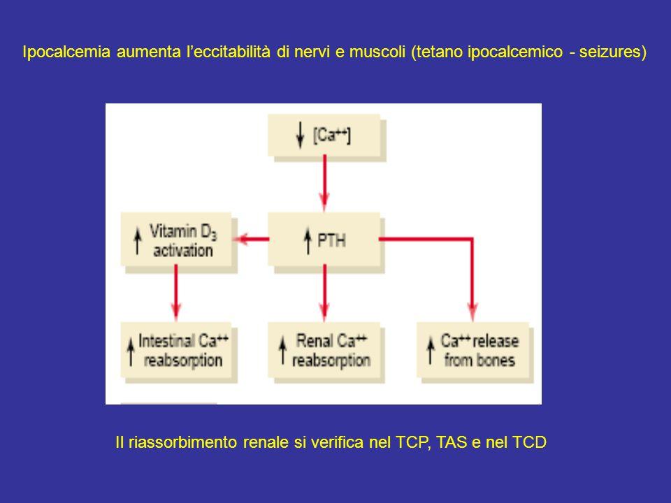 Ipocalcemia aumenta l'eccitabilità di nervi e muscoli (tetano ipocalcemico - seizures)