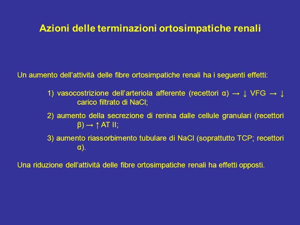 Azioni delle terminazioni ortosimpatiche renali