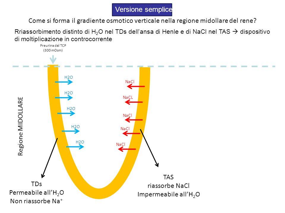 Versione semplice Come si forma il gradiente osmotico verticale nella regione midollare del rene