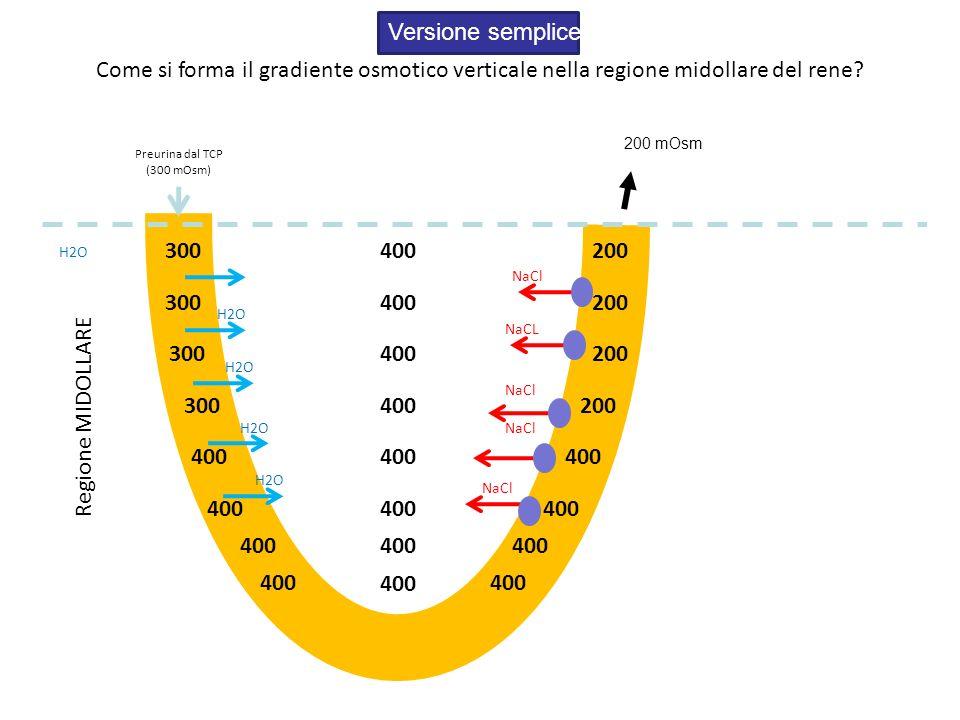 Versione semplice Come si forma il gradiente osmotico verticale nella regione midollare del rene 200 mOsm.