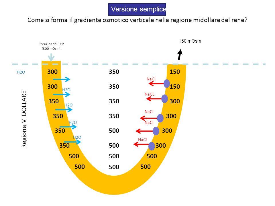 Versione semplice Come si forma il gradiente osmotico verticale nella regione midollare del rene 150 mOsm.